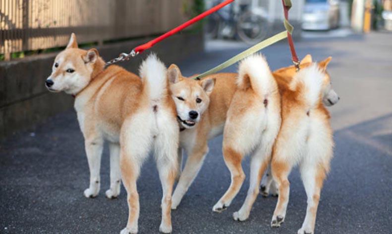 Respetar a otros perros y a sus dueños