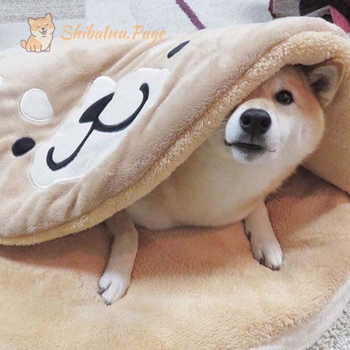 cama para shiba inu