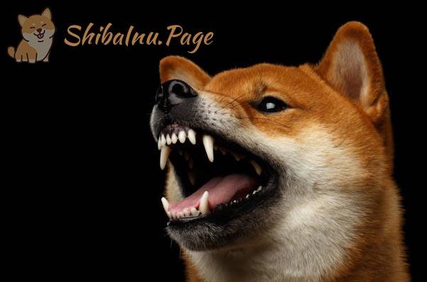grito del shiba inu