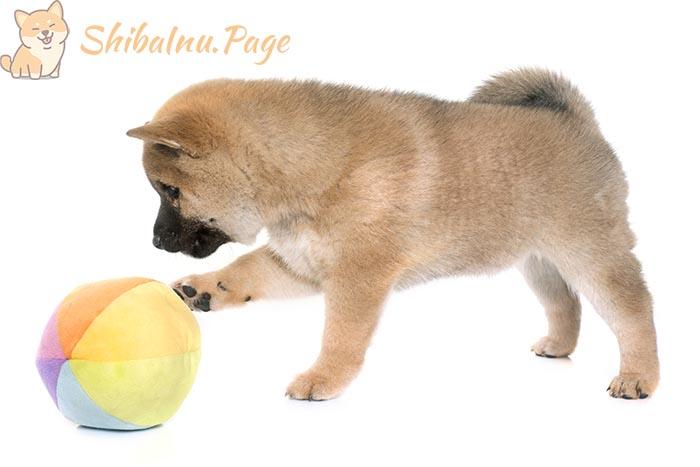 enseñar al perro a traer la pelota