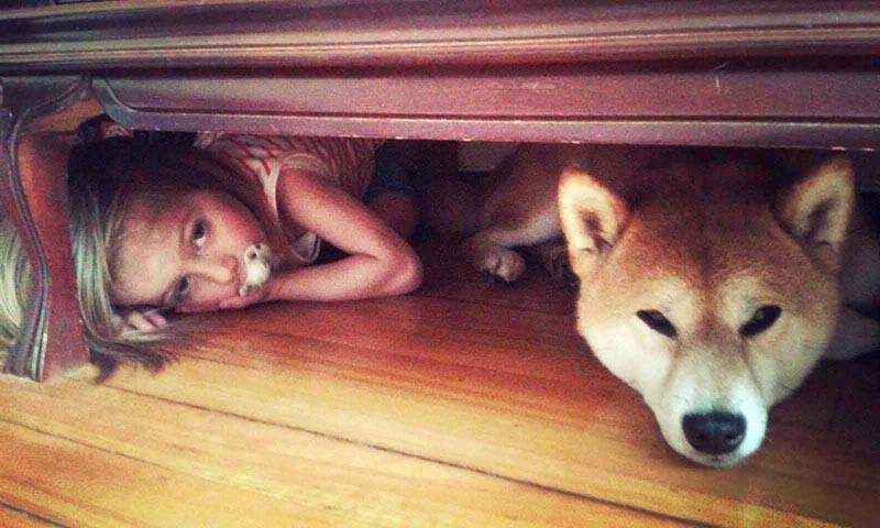 el shiba inu y los niños 2