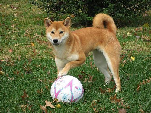 mejor juguete para perros