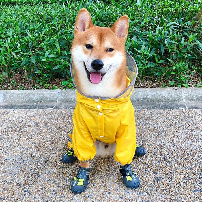 mejo ropa para perros
